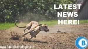 Greyhound Races UK