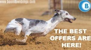 Greyhound Race Deals