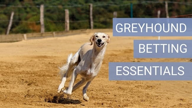 Greyhound Bet Tips