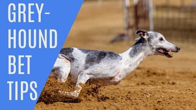 Greyhound Betting Tips