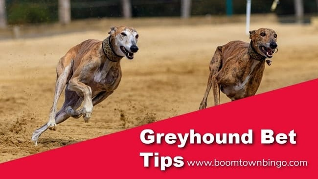 Greyhound Betting Tipster